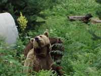 2_dancing-bears-rescue-park-belitsa
